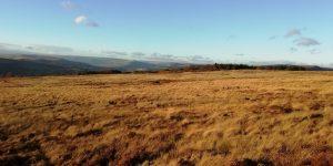 Moorland and deer