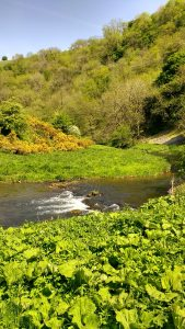 River Dove Dovedale