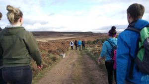 Hikers on moorland path