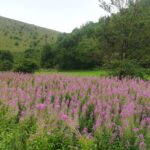 Flower - Manifold Valley