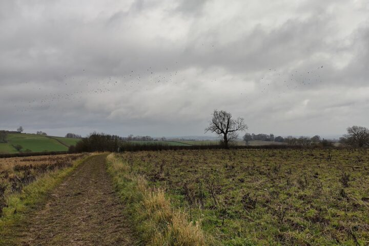 Fields heading to Risley
